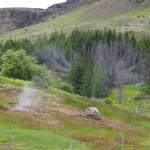 sterbender Wald über einem Hotspot, der nach dem grossen Erdbeben von 2008 neu entstanden ist